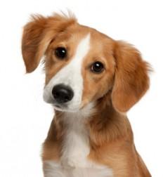 jerky-dog