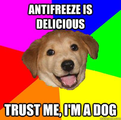 Мемы на английском: Пес-советчик
